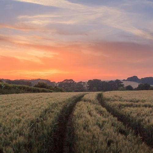 Sunset over rural Hampshire