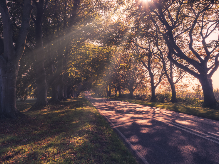 Sun rays illuminate trees over straight road in Dorset, UK